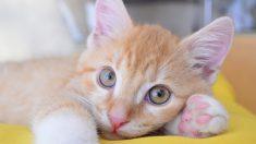 Salvan a su gata atrapada bajo su casa en plena inundación, para liberarla rompen parte del piso