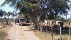 Fiscalía halló 69 cadáveres en 49 fosas clandestinas en el oeste de México