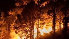 En España se declara un incendio forestal en La Palma, el viento dificulta su control