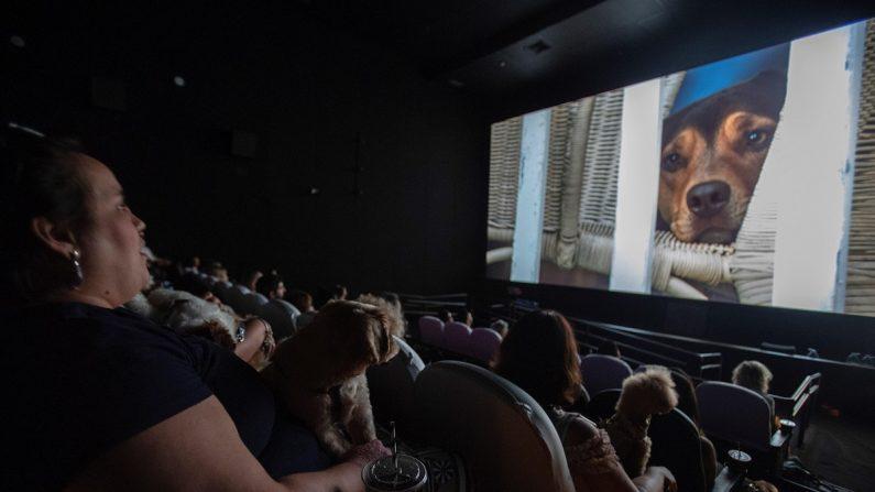 """Decenas de personas y sus perros asisten al preestreno de """"A Dog's Way Home"""" en cine del centro comercial Frei Caneca, en Sao Paulo (Brasil). EFE"""
