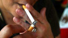 La nicotina disminuye el crecimiento celular embrionario durante el embarazo
