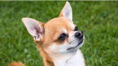 La alerta meteorológica más increíble: vientos que pueden hacer volar un perro