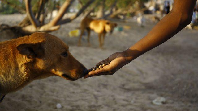 Perro callejero de Argentina espera 6 meses a una azafata alemana y su perseverancia rinde frutos