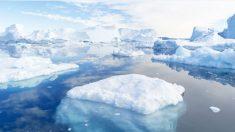 El descubrimiento de un tiburón de Groenlandia de 400 años de edad rompe un récord mundial