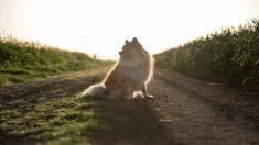 Perrito confundido no sabía que su dueño lo estaba abandonando y esperó 10 años su regreso