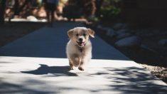 Encuentra un cachorro mientras corría una maratón y decide llevarlo consigo hasta la meta