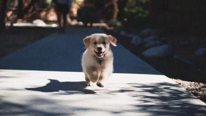 Un cachorro. (Crédito: Andrew Schultz/Unsplash)