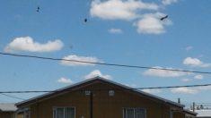 """Cae lluvia de excremento sobre poblaciones de Chile que luce como """"manchas de café"""" sobre las casas"""