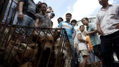 """China celebra la """"exposición canina más importante del mundo"""" previa al Festival de Carne de Perro"""