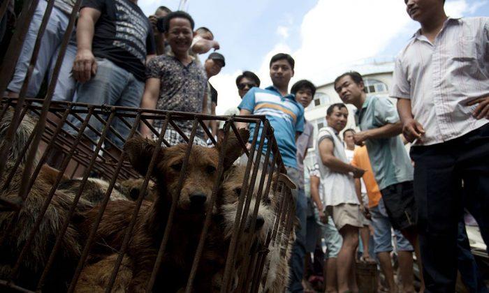 Vendedores esperan a que clientes compren perros enjaulados en un mercado de Yulin, provincia de Guangxi, en el sur de China, el 21 de junio de 2015. (STR/AFP/Getty Images)