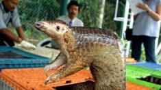 6 animales que en China son comidos hasta la extinción
