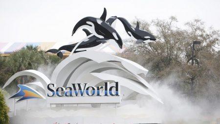 Declaran parque acuático de Orlando como Centro Certificado de Autismo