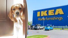 Esta tienda italiana rompe los esquemas para dar refugio a perros callejeros durante el invierno