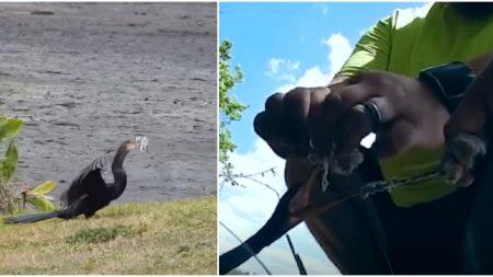 Pensaban que el ave estaba comiendo, pero cuando se acercan comienza un vibrante rescate