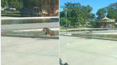 Registran vídeo de un perrito que pasa las horas sacando la basura de una pileta en un parque
