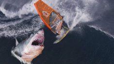 A centímetros de ser devorado: fotógrafo captura imágenes de un gran tiburón blanco