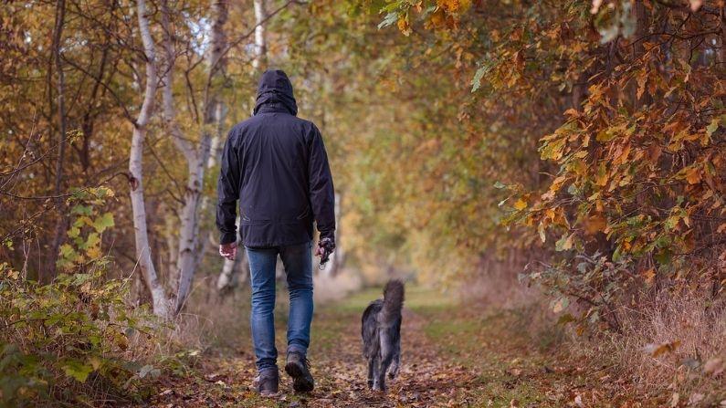 Imagen Ilustrativa (schroederhund en Pixabay)