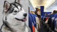 Un pasajero aéreo de cuatro patas cumple su misión en los cielos. ¡Es realmente un buen chico!