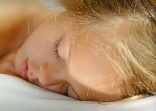 Koala Rest ofrece trabajo durmiendo en sus almohadas (Imagen de archivo - Wikimedia)