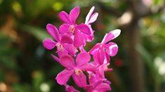 Las orquídeas en peligro de extinción en México por acelerada deforestación