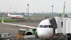 Escorpión cuelga del portaequipajes de un avión en pleno aterrizaje