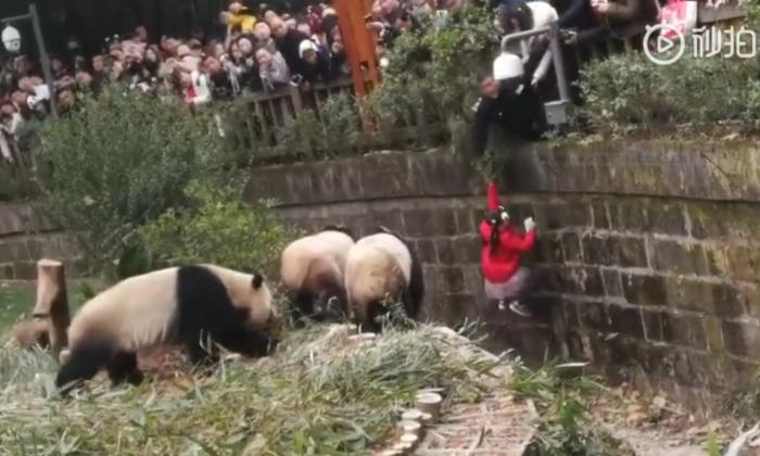 Una niña de 8 años es rescatada de un foso de pandas el 9 de febrero de 2019 en Chengdu, China. (Captura de pantalla del usuario Dada-Sitanni Silafu Siji/Weibo.com)
