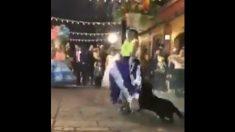 Perrito callejero de Oaxaca que baila al son de tambores y fuegos artificiales es ya un símbolo de las fiestas
