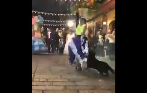 Perrito Mazapán (Captura de vídeo)