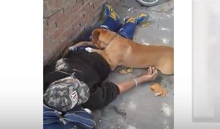 Rocco, la mascota de Mario atiende a su dueño con cariño mientras el hombre yace desmayado en el suelo en espera de la ambulancia.(Captura de Vídeo)