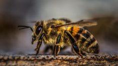 Estudio advierte que la disminución masiva de insectos podría traer consecuencias catastróficas