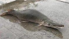 """Criatura """"mitad pez y cocodrilo"""" dejó perplejos a visitantes de un lago: expertos explicaron qué es"""