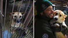Rescatistas cierran criadero de carne de perro y dan libertad a cientos de cachorros