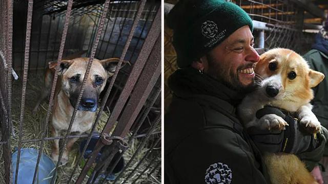 Rescatistas de Humane Society International (HSI) cierran un criadero de carne de perro en Hongseong, Corea del Sur. (Jung Yeon-je/Getty Images)