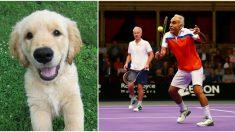 """Los verdaderos ganadores de la """"Champions Tennis"""" son estos peludos que dan mucho más que una pata"""
