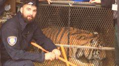 Fumador de marihuana se encuentra con un tigre obeso en un garaje abandonado