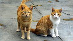 Condenan a anciana de 79 años a 10 días de prisión por alimentar gatos callejeros