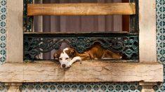 Alquila una casa que no permite tener perros pero su vecina tiene un plan que se vuelve viral