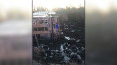 Camión vuelca y 3000 cerditos se dan a la fuga en una carretera de Illinois