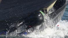 Fotógrafo registra cómo una ballena se traga un buzo y lo escupe