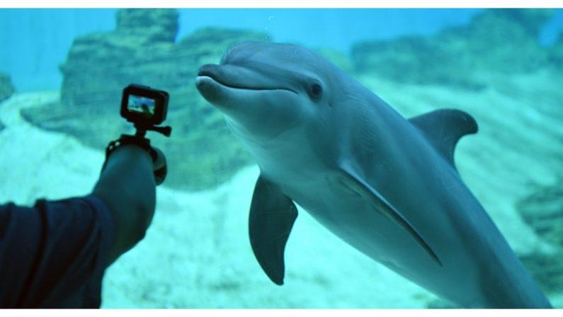 Filman a un hombre sacando en Rusia a un delfín de un río con sus manos para devolverlo al mar