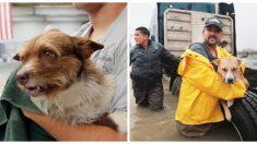 Dueños de mascotas serán multados o encarcelados si los abandonan durante los huracanes, ¿qué opinas?