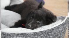 Joven brasilero recicla neumáticos viejos y los transforma en camas para mascotas ¡lindas y ecológicas!