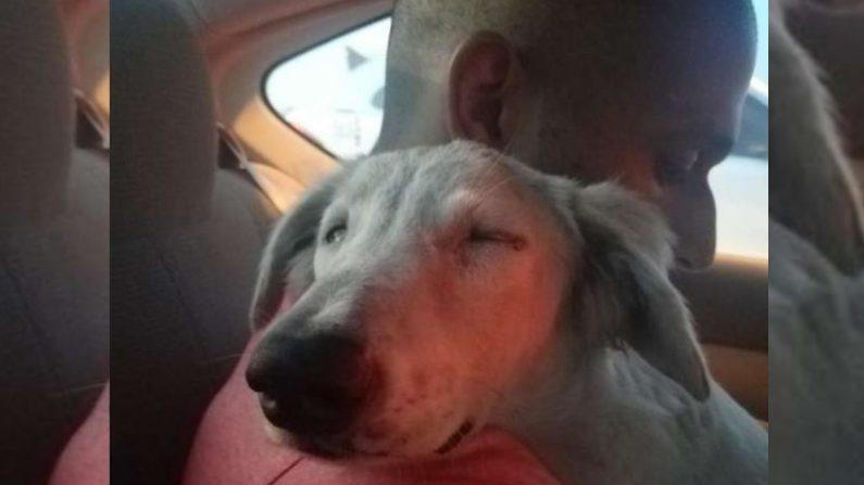 """Perrito callejero y desnutrido se esconde bajo un coche en Dubai y """"ruega"""" que alguien lo lleve a casa"""
