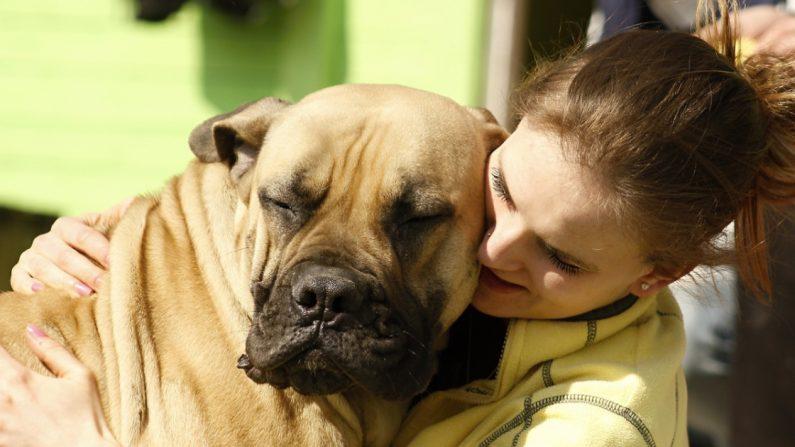 Novia angustiada adelanta la fecha de su boda para que asista su amado perro con cáncer terminal