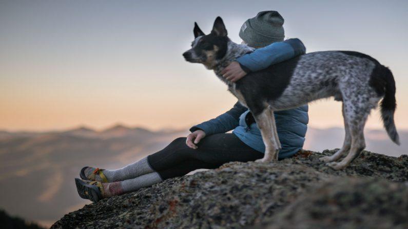 Conoce a Curry, un perrito que desafió a un oso para proteger a su querido dueño