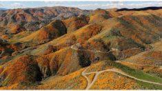 Maravillosa explosión de flores y mariposas sorprende a California tras 10 años de sequía e incendios