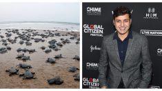 Tortugas marinas regresan a la playa después de 20 años gracias a este abogado que limpió el basural