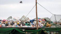 Encuentran 40 kilos de plástico en el estómago de una ballena: murió por 'shock' gástrico