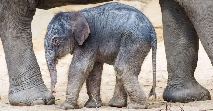Filman a un elefante bebé de color rosa en Sudáfrica
