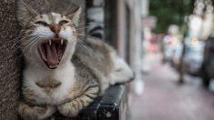 Perros y gatos actúan de forma extraña porque pueden estar viendo algo que uno no ve, dice estudio
